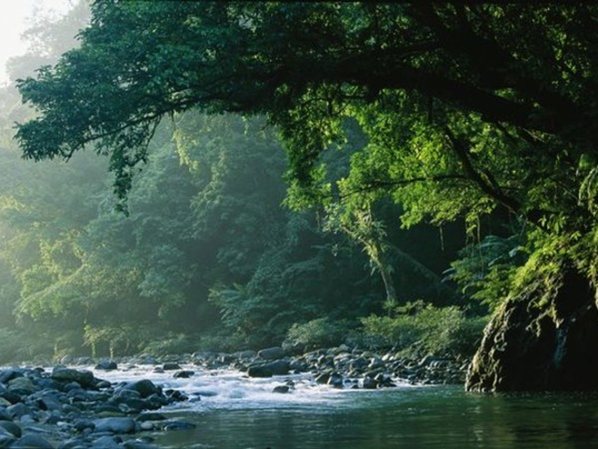 Selva filipina