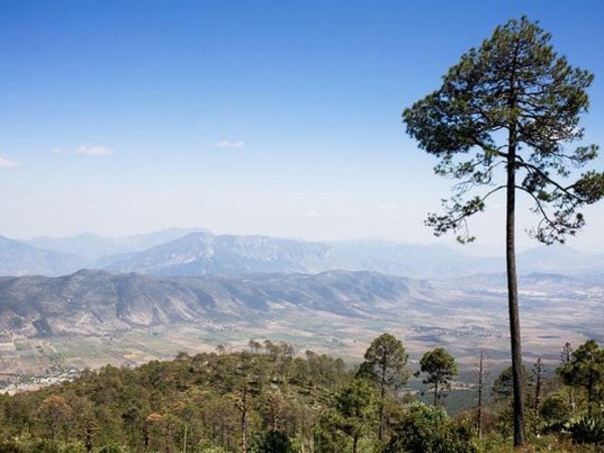 Los bosques de Mesoamérica