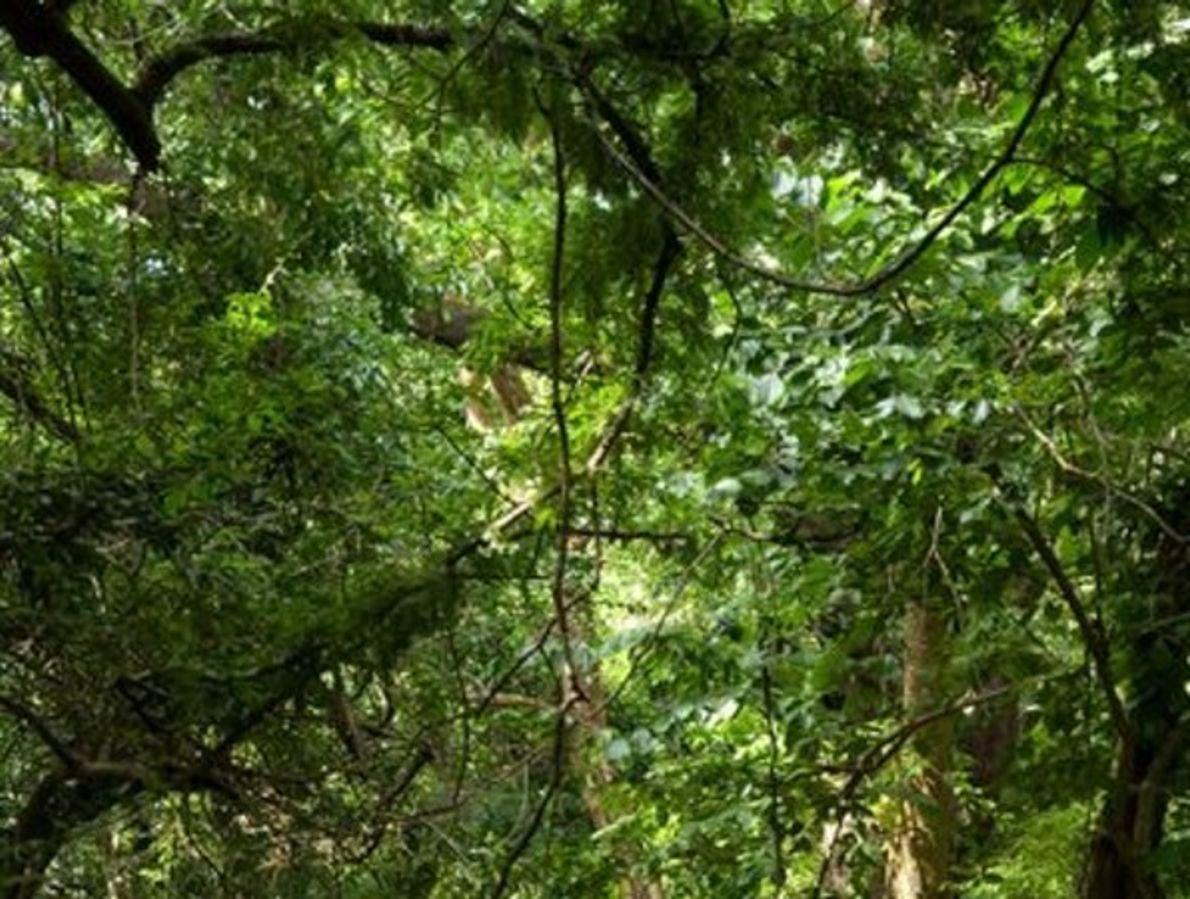 Zona este de los bosques africanos