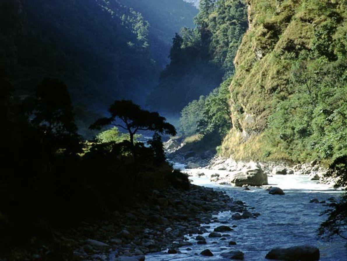 Los bosques del Himalaya