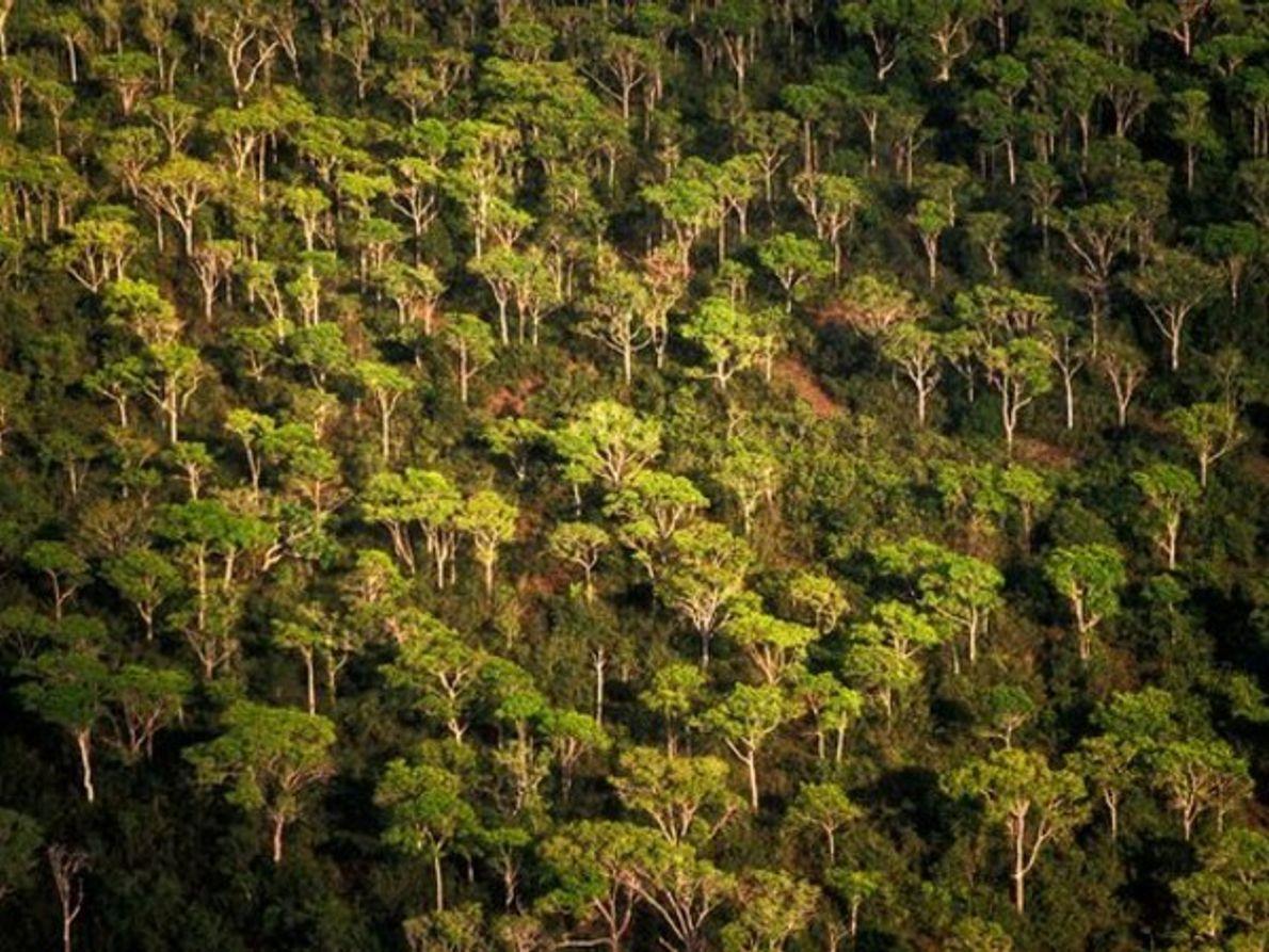 Los bosques de América del Sur