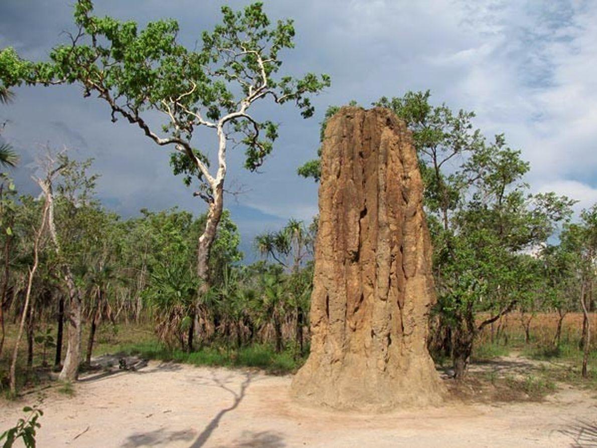 Controlar la temperatura como lo hacen las termitas