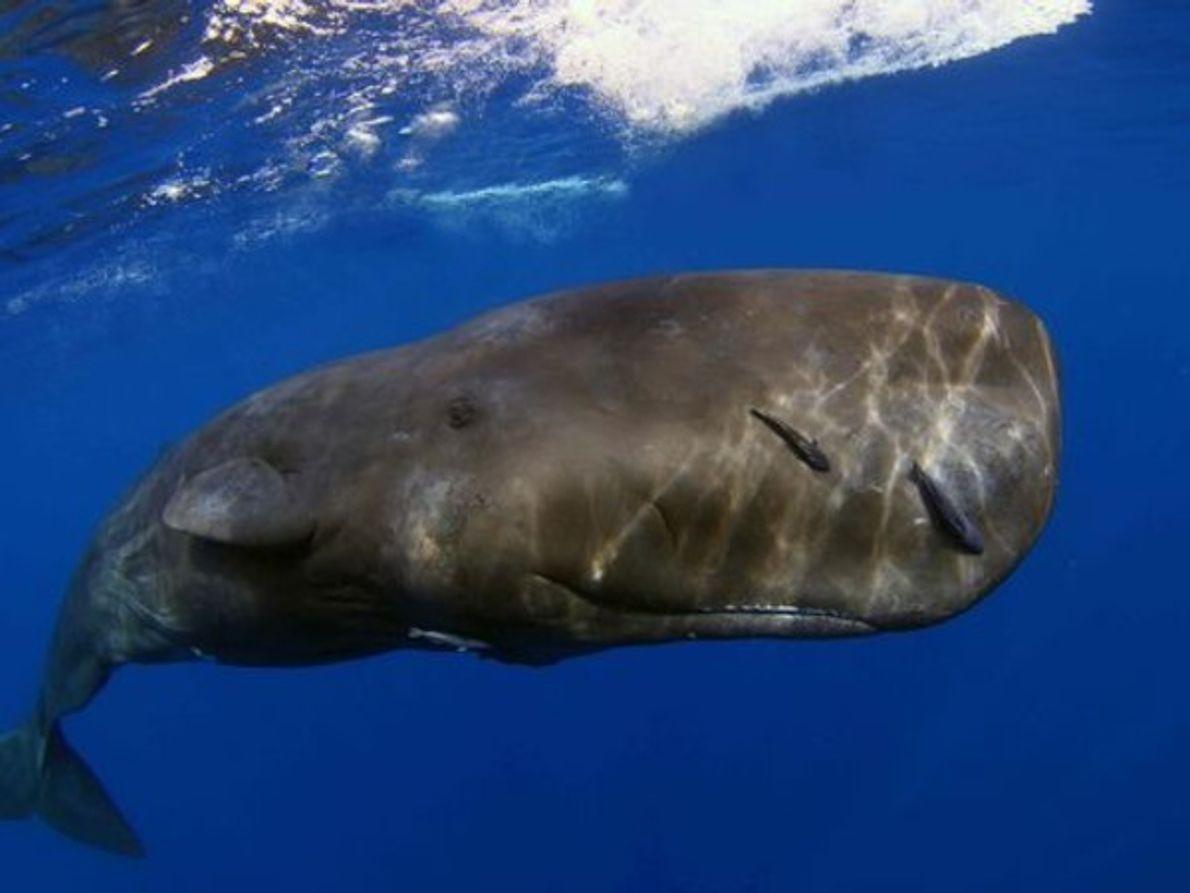 Primer Lugar: retrato de un animal marino