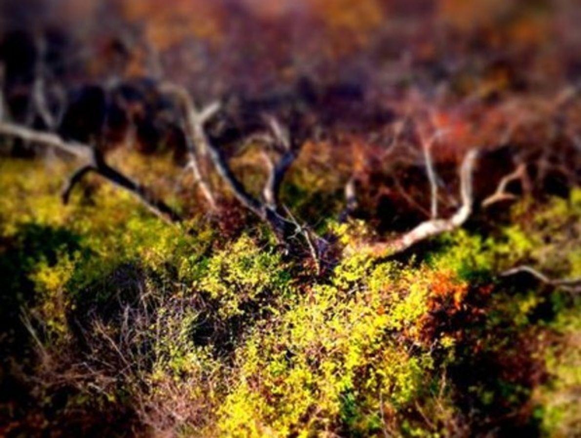 Hojas de otoño, Cabo Cod