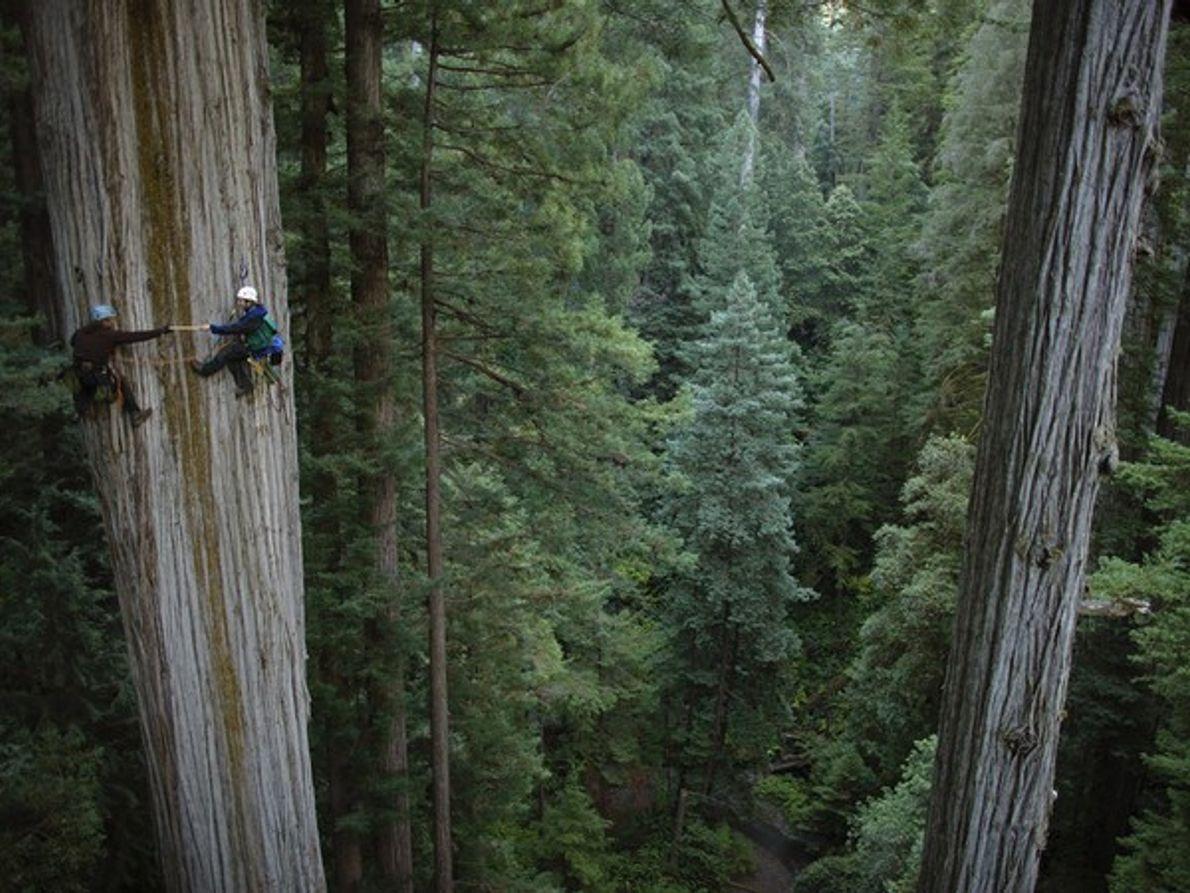 Sequoia, California