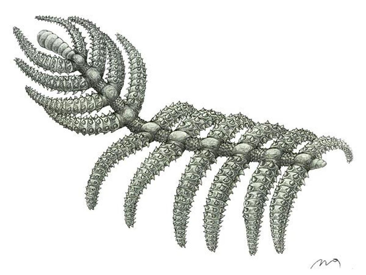 Cactus andante