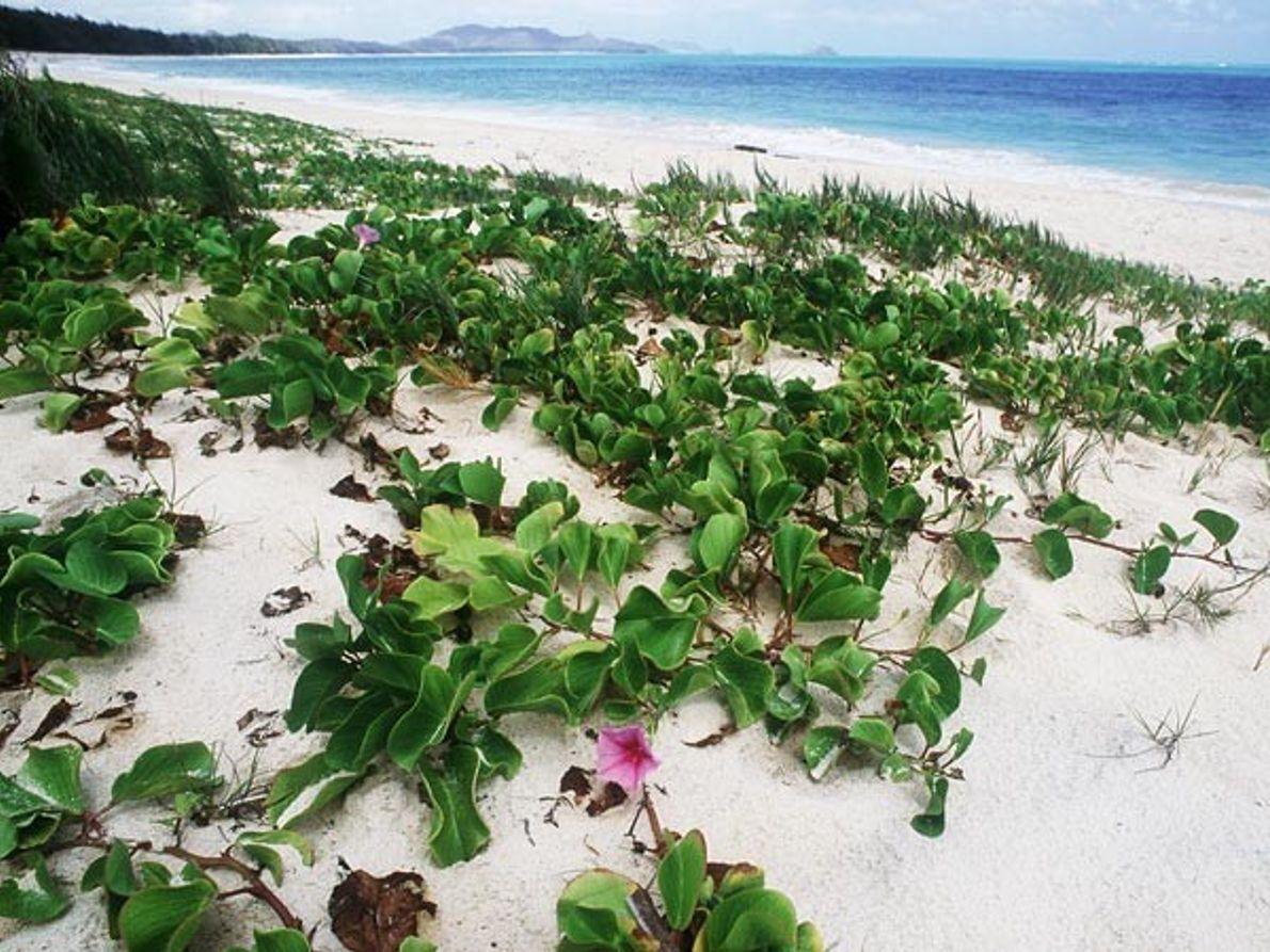 7. Playa Waimanal, Hawái