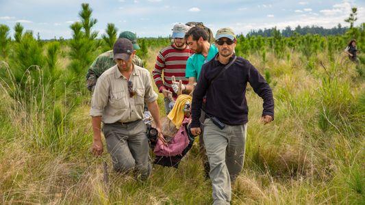 Un explorador español de National Geographic cuenta la historia del mayor programa de rewilding en las ...