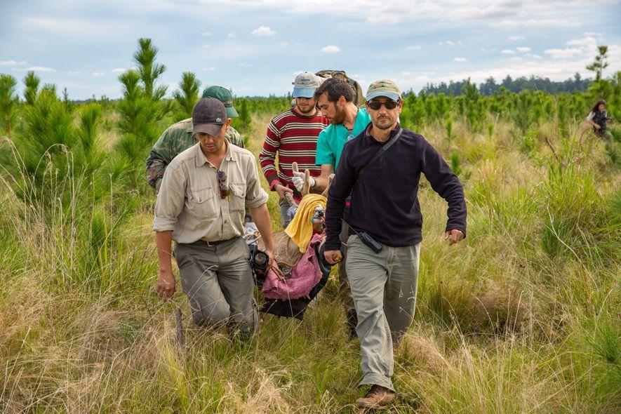Un explorador español de National Geographic cuenta la historia del mayor programa de rewilding en las …