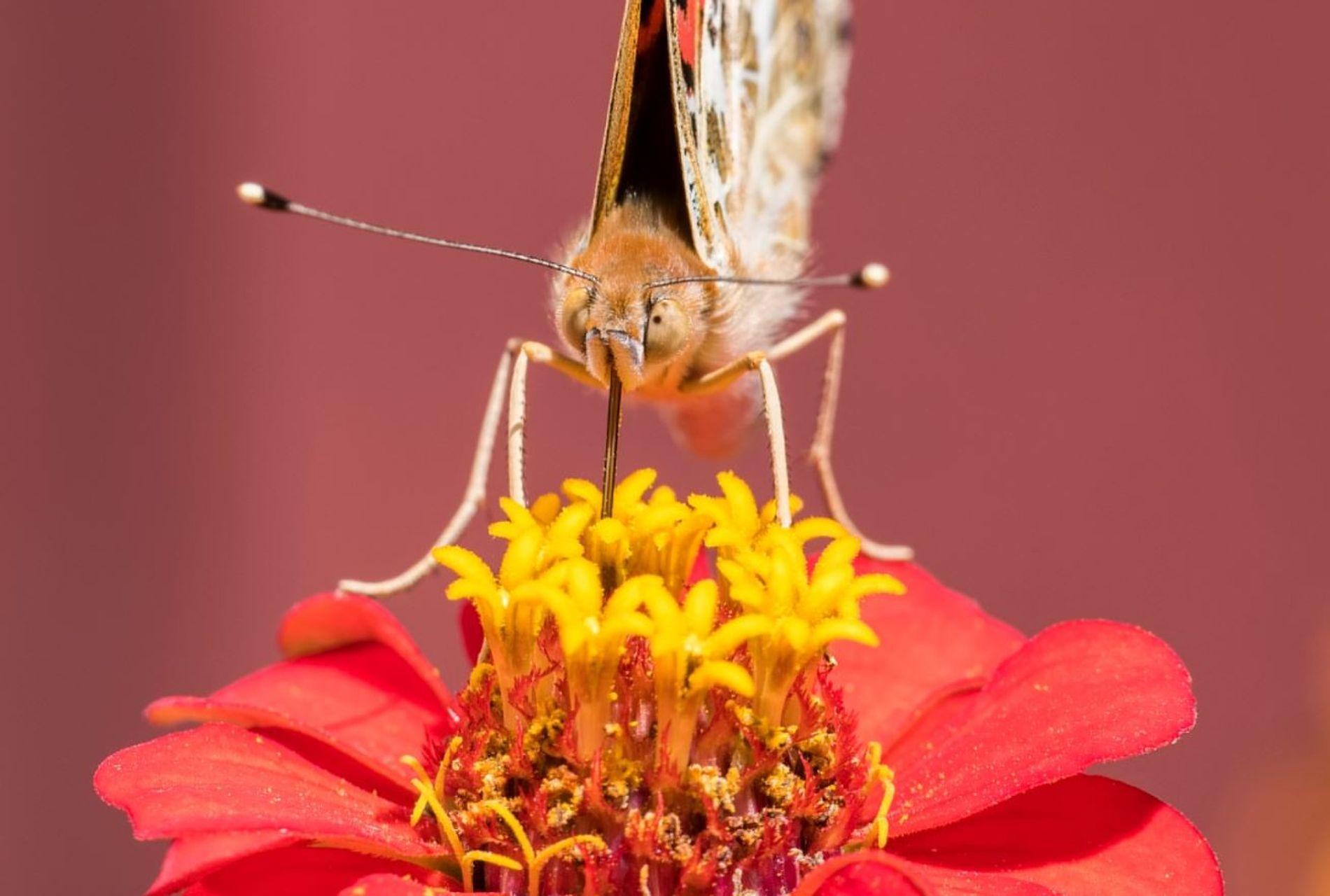 Estudio ADN polen