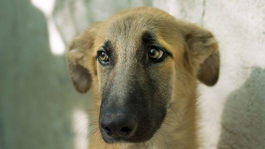 Más de 300 animales son abandonados en España cada día