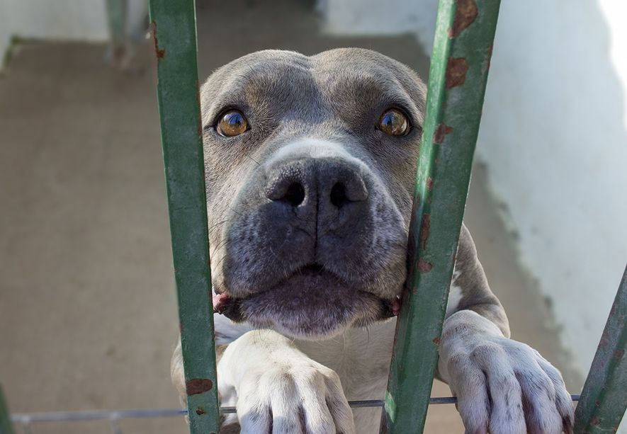 Miles de animales se encuentran esperando adopción en perreras y protectoras de animales como el albergue ...