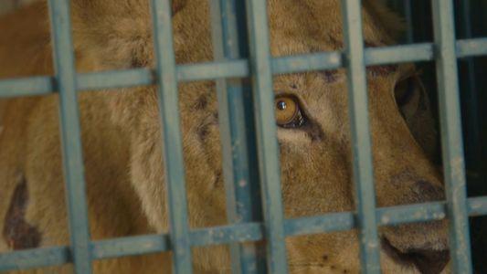 El peligroso rescate de los últimos animales del zoo de Alepo