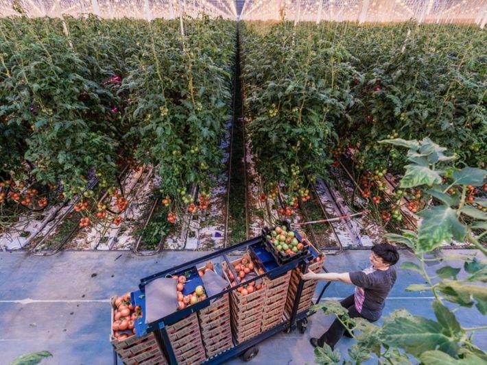 Alimentar al mundo en 2050