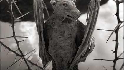 """Fotografías Insólitas: Se encuentran aves y murciélagos """"calcificados"""" en un lago africano."""