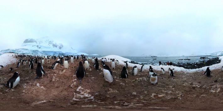 Vídeo 360°: Explora la Antártida entre pingüinos