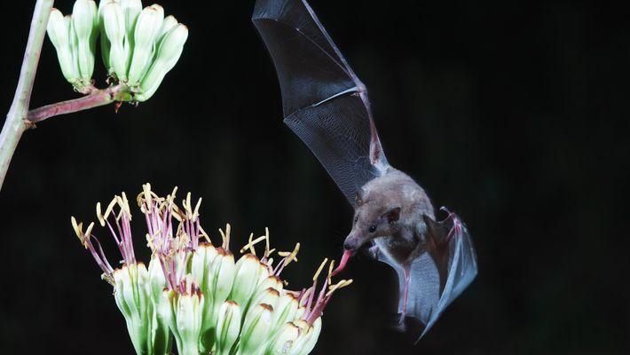 Los murciélagos no dan tanto miedo como crees