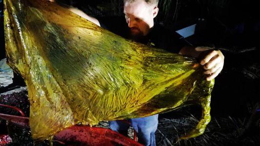 Un joven ballenato muere con 40 kilos de plástico en su estómago