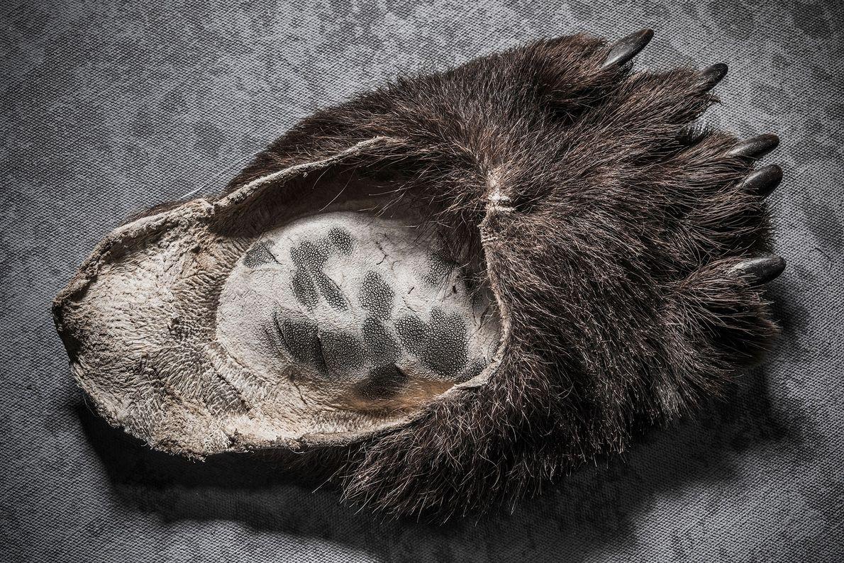 Garra de oso