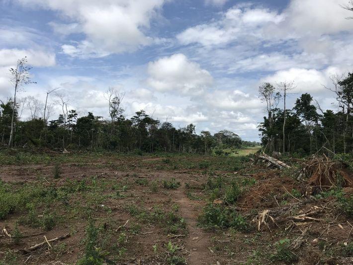 Deforestacion cacao