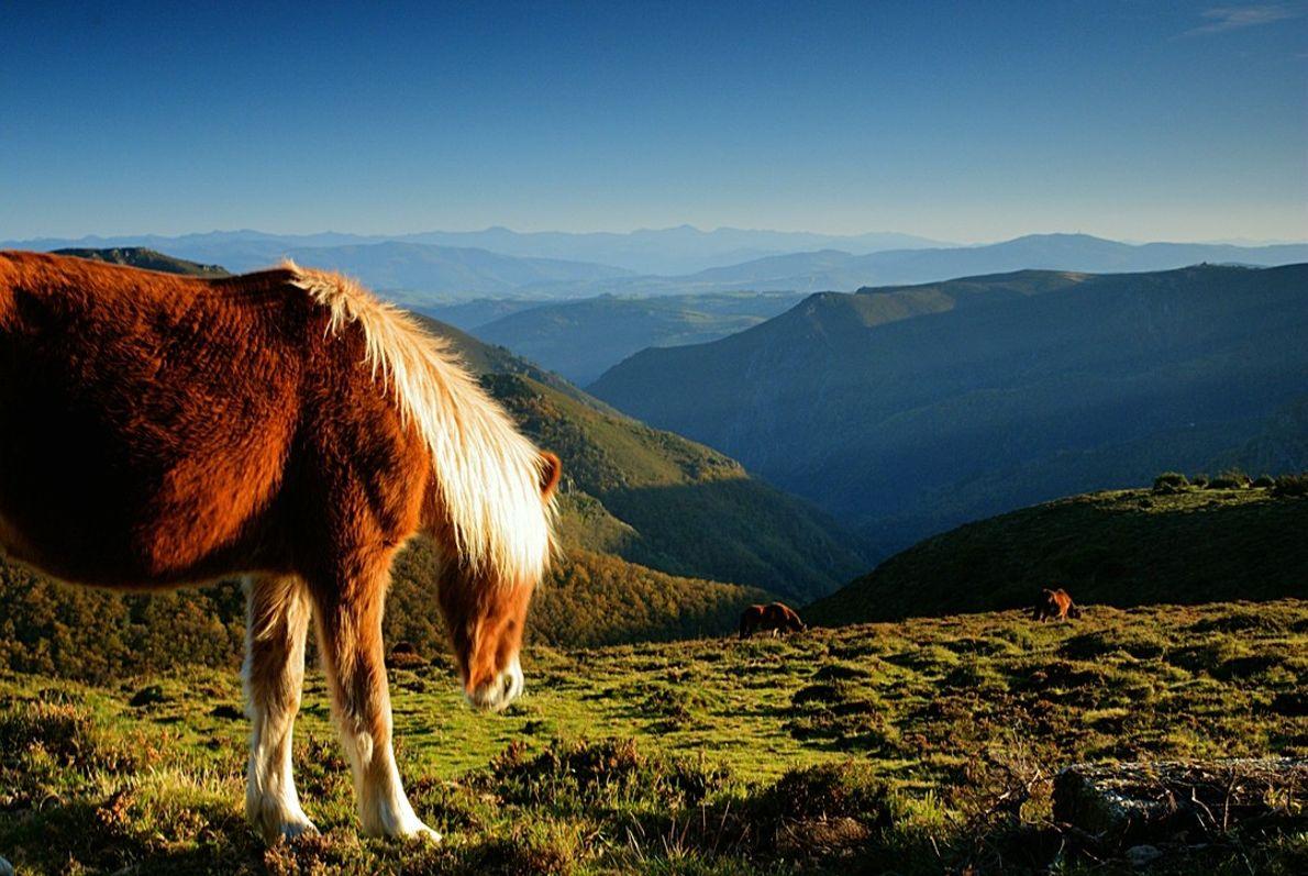 Turismo Asturias 08