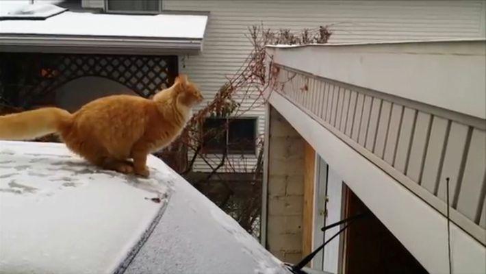 Caidas de gatos
