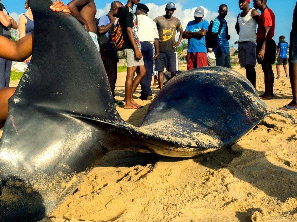 Cada vez más gente come animales marinos muertos, con consecuencias letales
