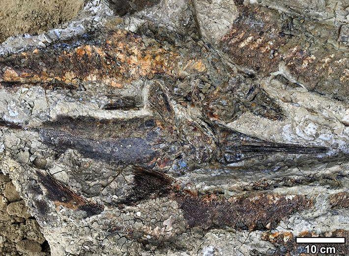 cementerio fosil