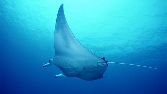 Nat Geo Wild en el Día Mundial de los Océanos