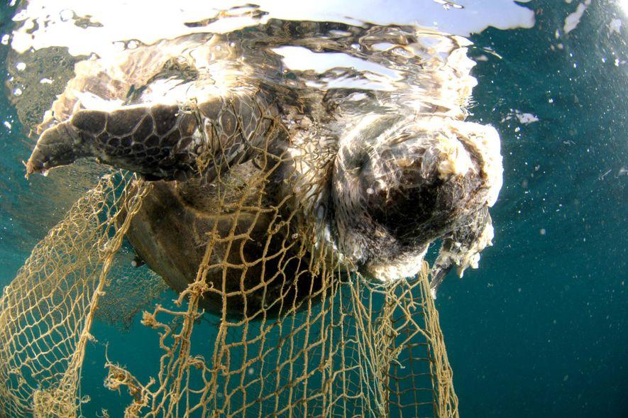 Los aparejos de pesca abandonados representan el 27 % del total de basura marina.
