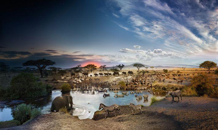 Serengeti, día y noche