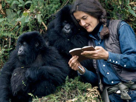 Día de las especies en peligro de extinción: Dian Fossey