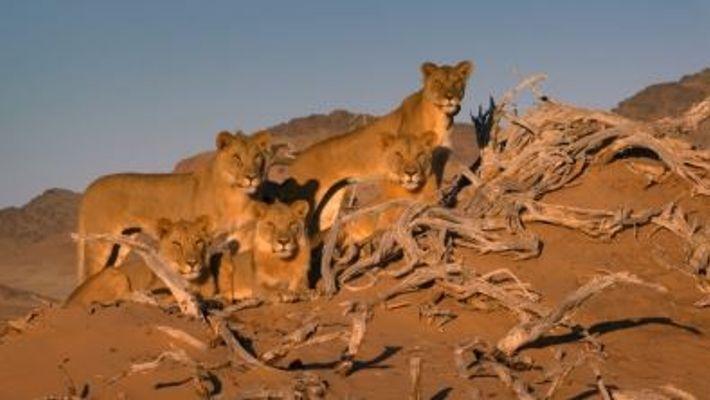 Día Mundial del León