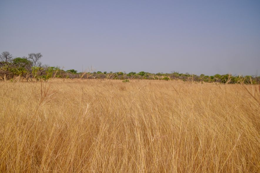 La sabana senegalesa durante la estación seca.