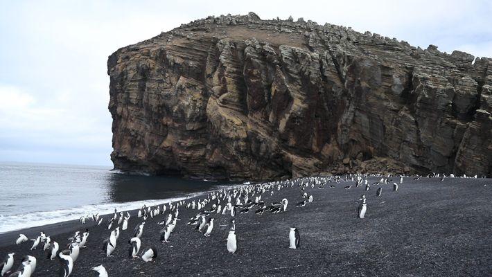 La isla Decepción, un volcán activo antártico y el hogar de miles de pingüinos