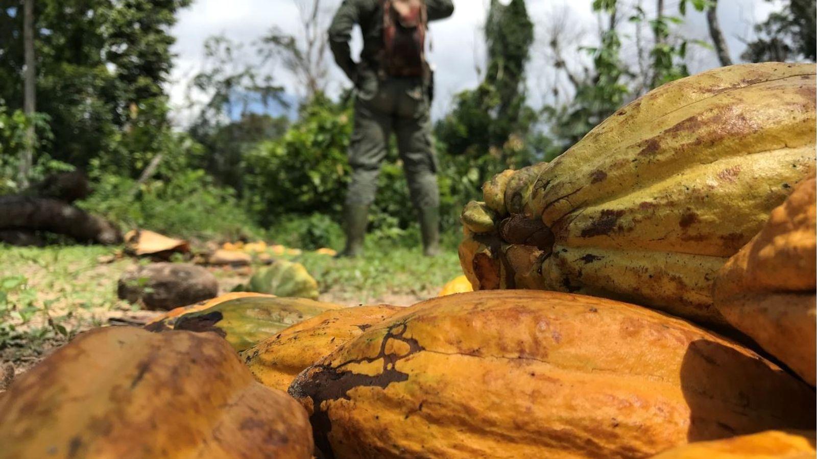 Deforestación cacao