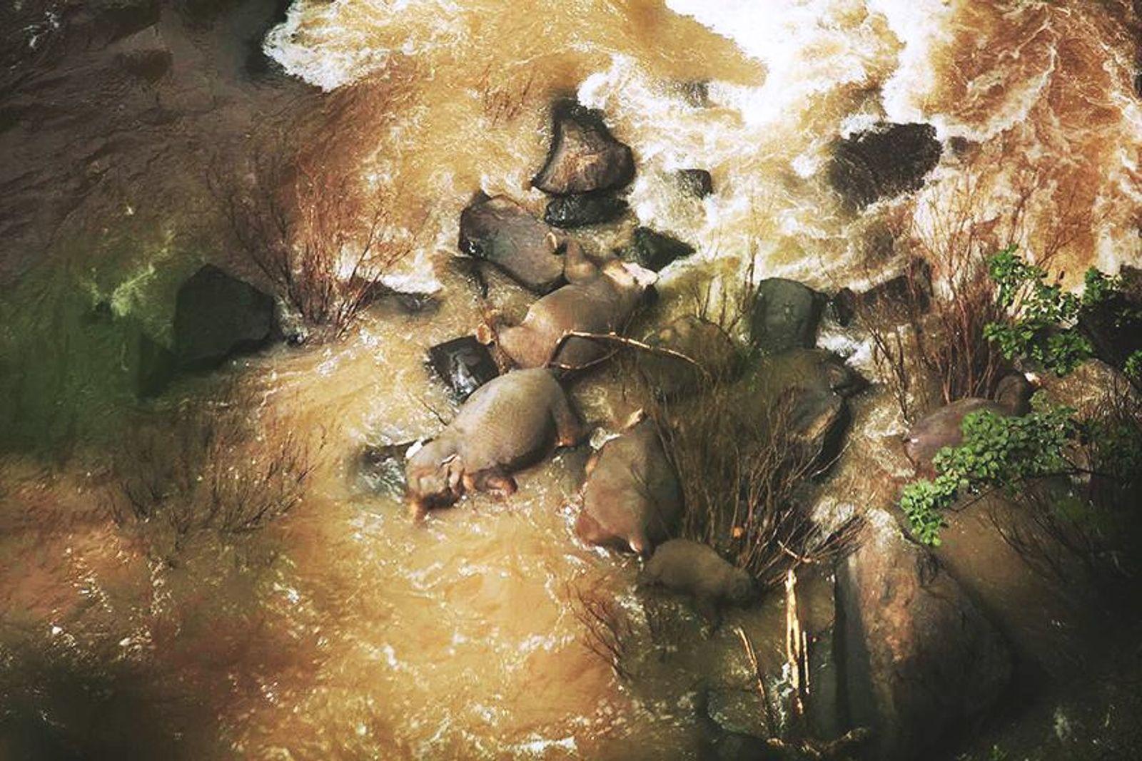 Elefantes accidente Tailandia