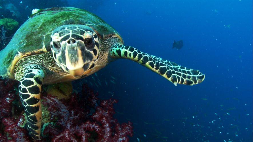 Una tortuga que brilla: la primera vez que se observa biofluorescencia en reptiles
