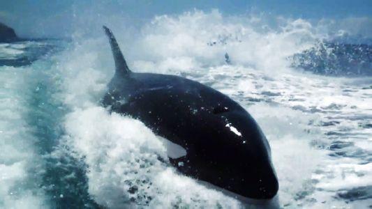 VÍDEO: una manada de orcas persigue un barco turístico