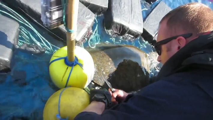 Rescatan a una tortuga marina atrapada entre fardos de cocaína