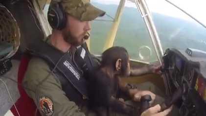 Un chimpancé bebé rescatado llega en avión a su nuevo hogar