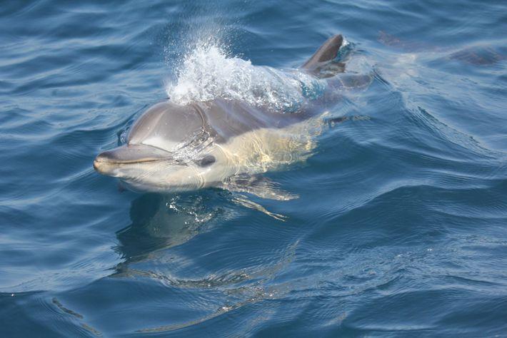 Plastificantes en delfines