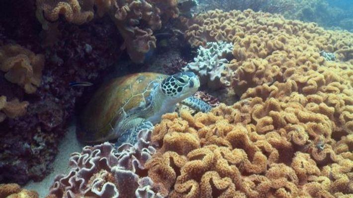 El 11 de junio de 1770, el capitán James Cook descubrió la Gran Barrera de Coral ...