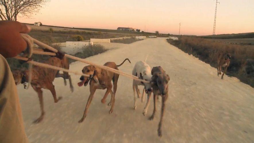 El documental muestra cómo son entrenamos muchos perros, atados a la parte posterior de un vehículo durante 15 o 20 kilómetros.