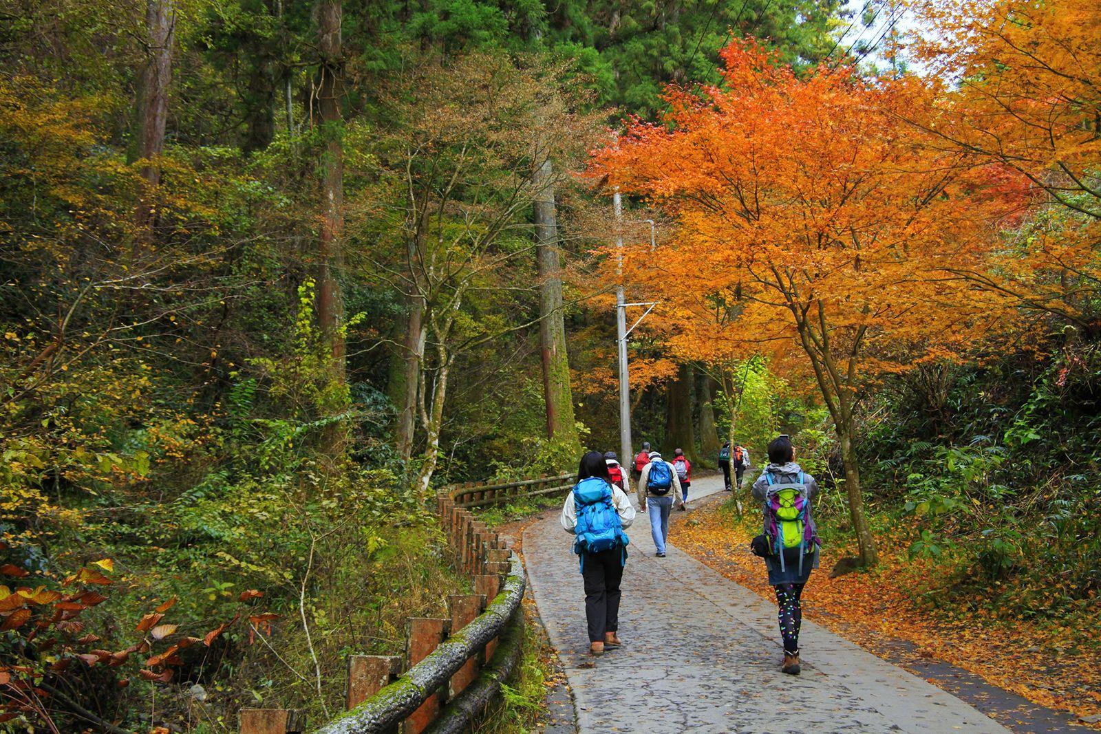 Imagen de excursionistas caminando por un sendero hacia el Monte Takao