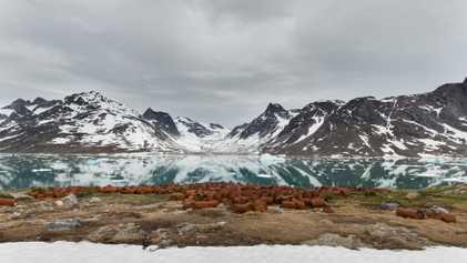 Esta base de la II Guerra Mundial abandonada en Groenlandia filtra residuos tóxicos