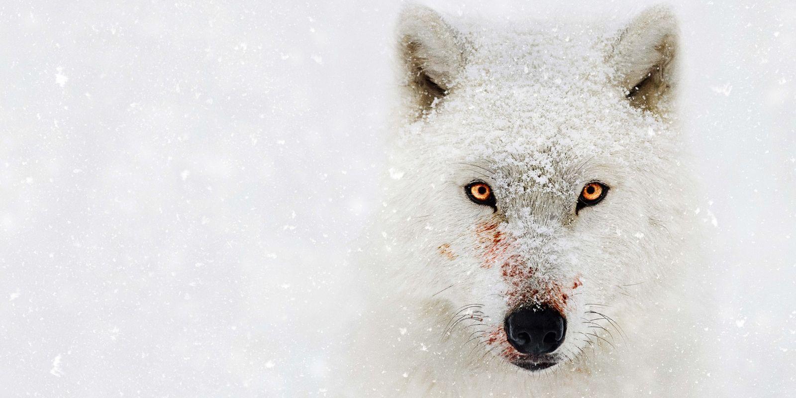 National Geographic muestra el deterioro de la Tierra en Planeta Hostil