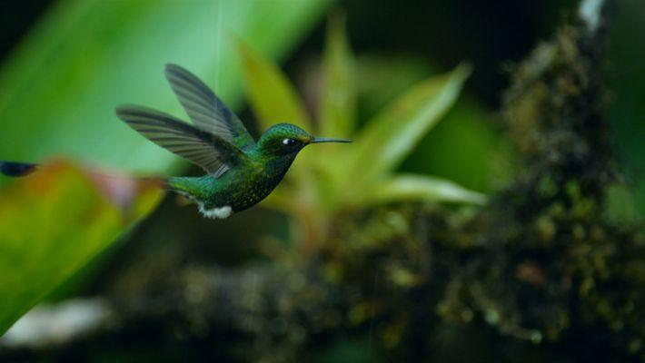 Un colibrí busca néctar en plena tormenta