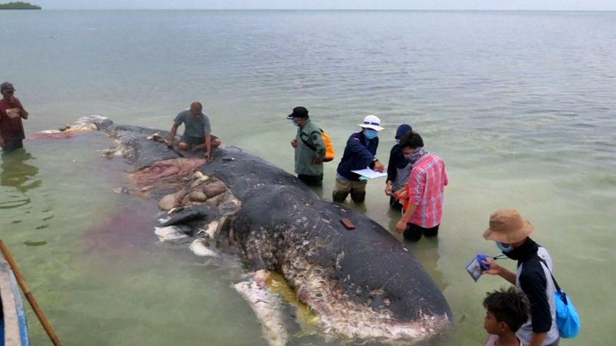 Este cachalote muerto tenía seis kilos de plástico en el estómago
