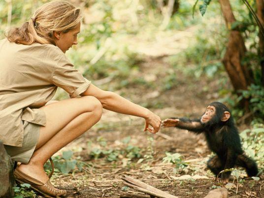 Te invitamos al encuentro con la primatóloga Jane Goodall en Madrid